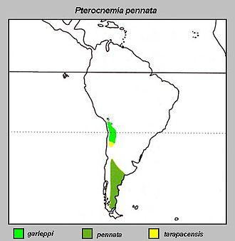 Darwin's rhea - Image: Pterocnemia pennata Distribution map