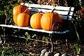 Pumpkin Line-up (1994555291).jpg