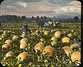 Pumpkins in the Rogue River Valley, Oregon (3654964457).jpg