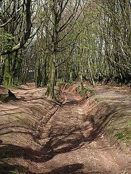 Quantock bridleway - geograph.org.uk - 1278777