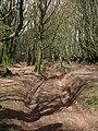 Quantock bridleway - geograph.org.uk - 1278777.jpg