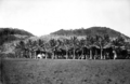 Queensland State Archives 1363 Coconut Palms Palm Island c 1935.png