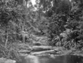 Queensland State Archives 407 Morans Creek Lamington National Park Beaudesert Shire September 1933.png