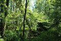Réserve naturelle régionale des étangs de Bonnelles le 26 mai 2017 - 36.jpg