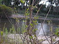 Río Santa Lucía, 25 de Agosto, arenal.JPG