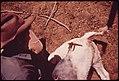 RANCH HAND BRANDS CALF - NARA - 543683.jpg