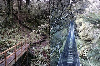 Rakiura Track hiking trail in New Zealand