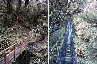 Rakiura Track - The winding nature of the track through the bush