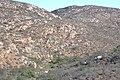Rancho El Cipres Many cypress in the arroyo (37718058835).jpg
