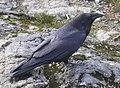 Raven Cypress Provincial Park 2.JPG