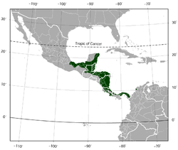 Red-eyed Treefrog Agalychnis callidryas distribution map.png