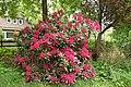 Red flowers in Heide (Holstein) 013 (9294781156).jpg