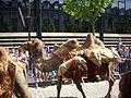 Reims - fêtes johanniques, défilé (11).JPG