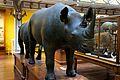 Rhino (6915992529).jpg