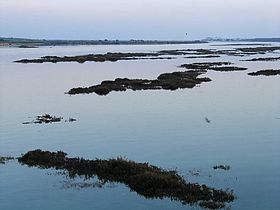 Image illustrative de l'article Ria Formosa