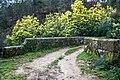 Ribadavia, Province of Ourense, Spain - panoramio (2).jpg