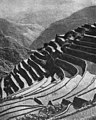 Rice terraces made by Ifugaos, Mountain Province (c.1917).jpg