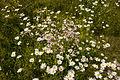 Ringve botaniske hage foto-Åge Hojem, NTNU Vitenskapsmuseet dsc9272 (15287168785).jpg