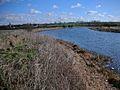 River Nene approaching Denford - geograph.org.uk - 130456.jpg
