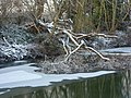 Riverbank and fallen tree - geograph.org.uk - 1655579.jpg