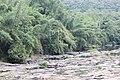 Rock from Parambikulam T R.jpg