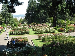 Washington Park (Portland, Oregon) - The International Rose Test Garden