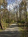 Roswell Riverwalk Trail, March 2018 1.jpg