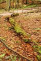 Roztoczanski park narodowy 014a.jpg