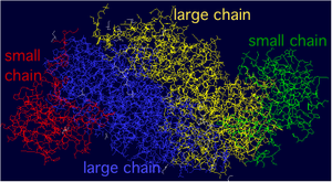 RuBisCO - Figure 3. In this figure, each protein chain in the (LS)2 complex is given its own color for easy identification.