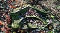 Ruiny Sanktuarium Matki Bożej Bolesnej z 1743 r., Kapliczna Góra 2018.10.31 (07).jpg