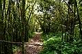 Rwenzori bamboo.jpg