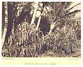 STODDARD(1892) pg83 Lauhala and Cocoanut Grove.jpg