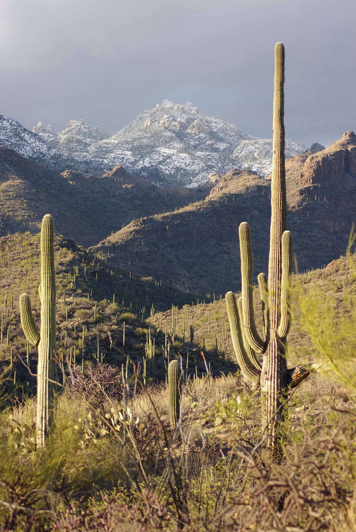 Picture of: Santa Catalina Mountains Travel Guide At Wikivoyage