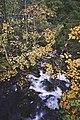 Sagfossen i Sagelven 10-10-19 6.jpg