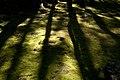 Saihoji Temple moss gardens, Kyoto (6289621641).jpg