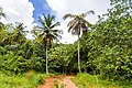 Samaná Province, Dominican Republic - panoramio (138).jpg