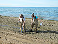 Sampling shoreline muck in Lake St. Clair (8741969470).jpg
