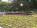 San Anton Attard Gardens 13.jpg