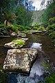 Sandspit River Wielangta Forest.jpg
