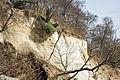 Sassnitz, Steilküste Abbruchkante 2.jpg
