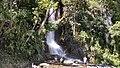 Saut d'eau. Haiti.jpg