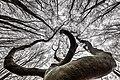 Schalksmühle-Baum Up! (31868883967).jpg