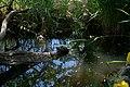 Schildkröte auf Baumstamm im Wasser, Zoologischer Garten Hof 08062019.jpg