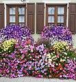 Schleuppners Blumenpracht - panoramio.jpg