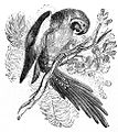 Screaming Parrot Drawing.jpg