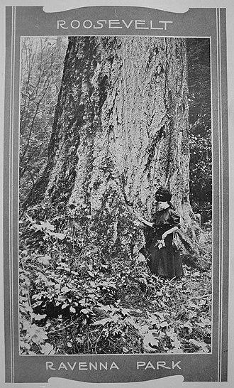 Ravenna Park - Image: Seattle Ravenna Park old growth 01