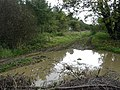 Sewstern Drift, near Croxton Kerrial - geograph.org.uk - 69358.jpg
