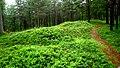 Sex gravhögar på Arnäsbackens gravfält, Arnäs sn, Örnsköldsvik. Six burial mounds, Arnäsbacken, Örnsköldsvik, Sweden (1).jpg