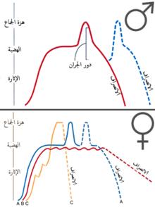 1e96a14ab8c27 دورة الاستجابة الجنسية البشرية - ويكيبيديا، الموسوعة الحرة