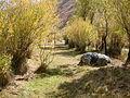 Shemshak road - panoramio.jpg